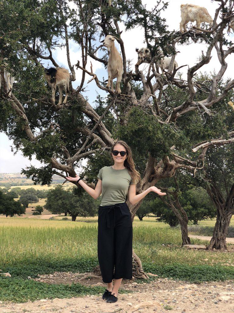 Kozy na strome