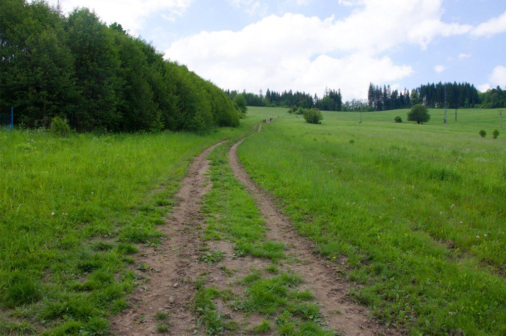 Cesta po lúke