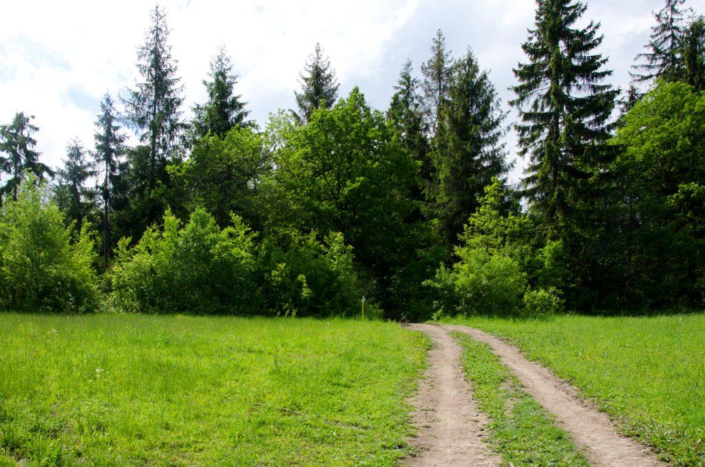 Na konci lúky pokračujete smerom do lesa