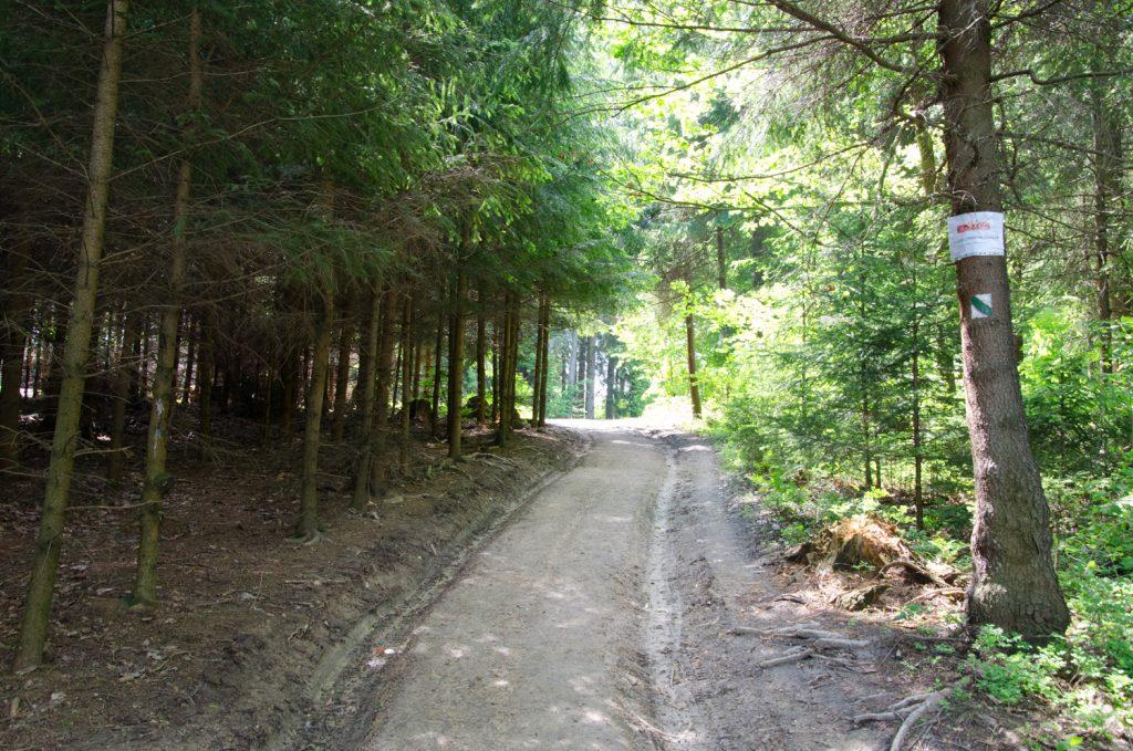 Pokračujte cez les