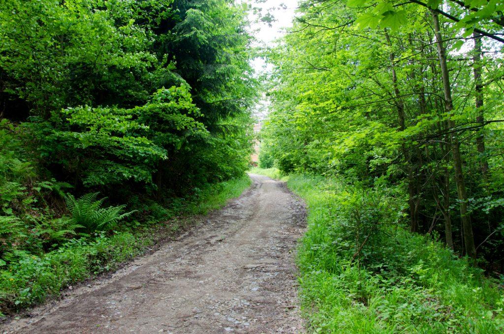 Opäť cesta lesom