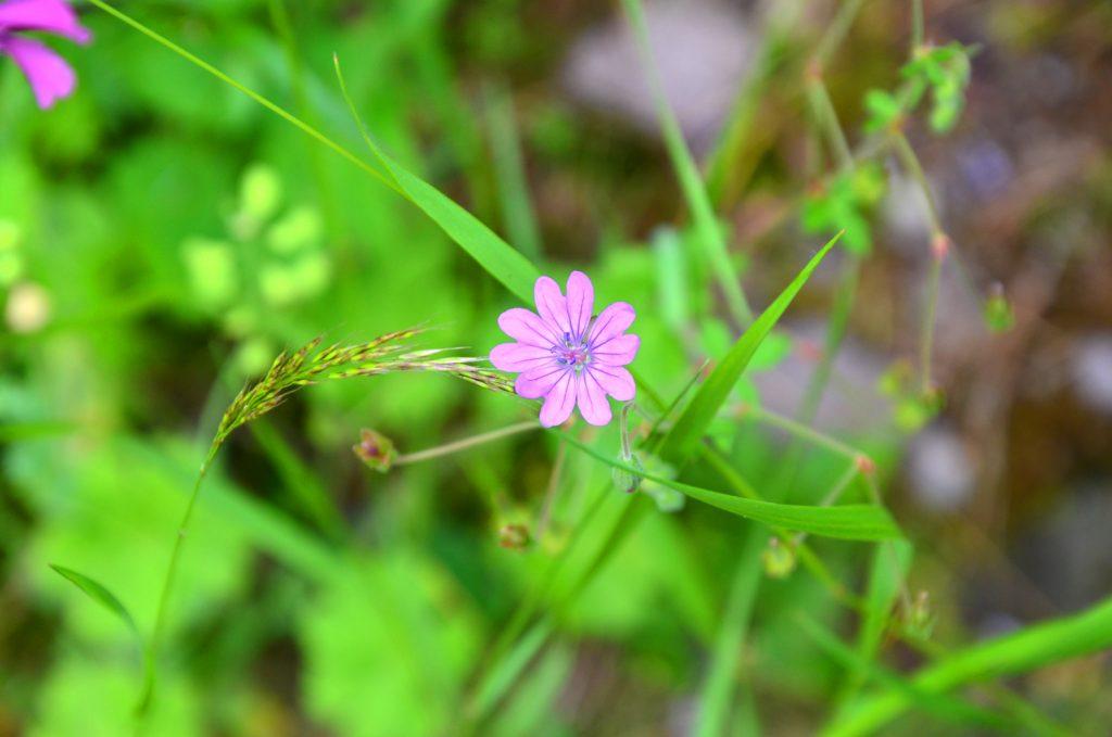 Ďalšie kvety