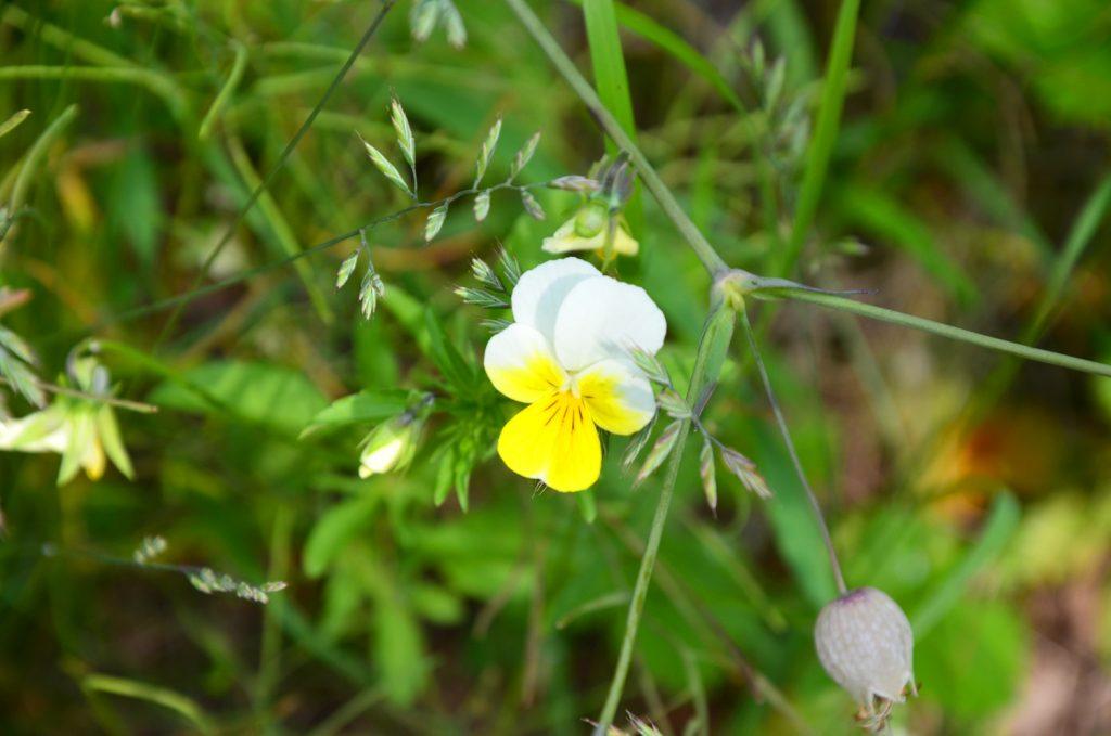 Aaaa ďalšie kvety