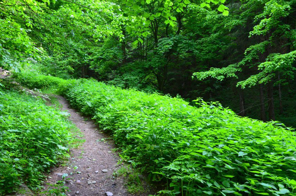 Na konci dediny sa vyberiete po lesnej cestičke