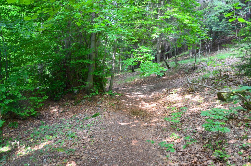 A opäť cez les