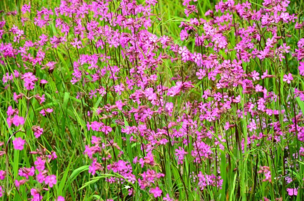 Výlet Špania Dolina - Lúčne kvety - keď som ich zbadal, hneď som sa rozplakal (alergia)