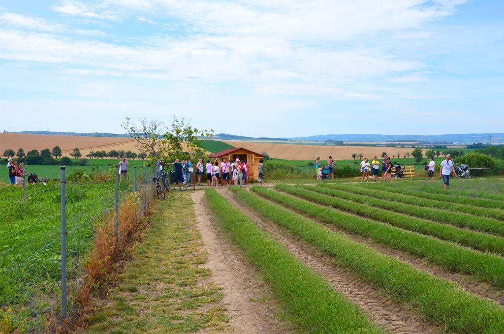 Levanduľové pole - Lístky na levanduľovú farmu si viete zakúpiť i na mieste v hotovosti
