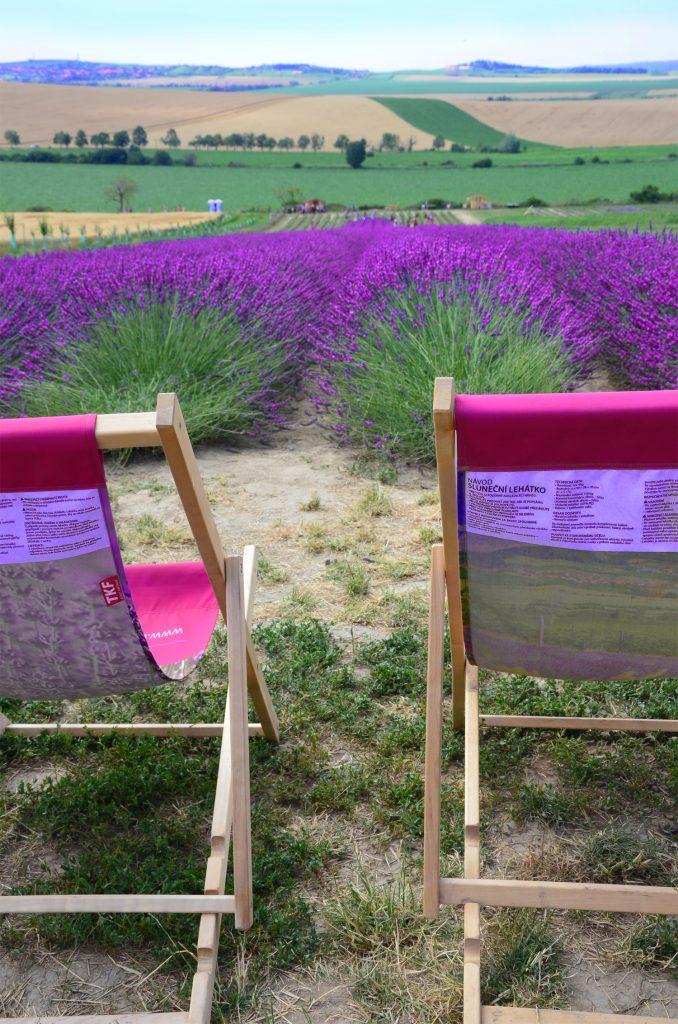 Levanduľová farma - môžete si oddýchnuť i na takýchto lehátkach