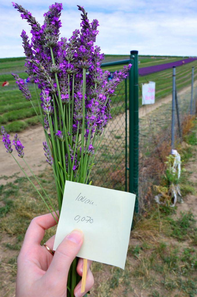 Levanduľová farma Starovičky - Kytička za 15 Kč