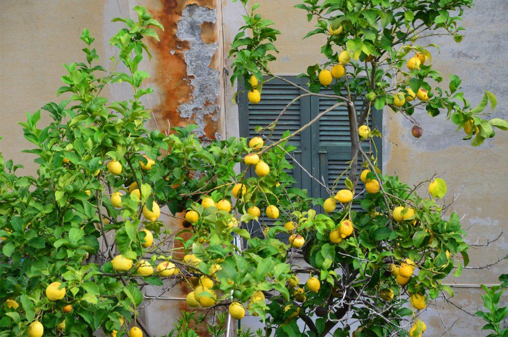 Všade samé citrusy