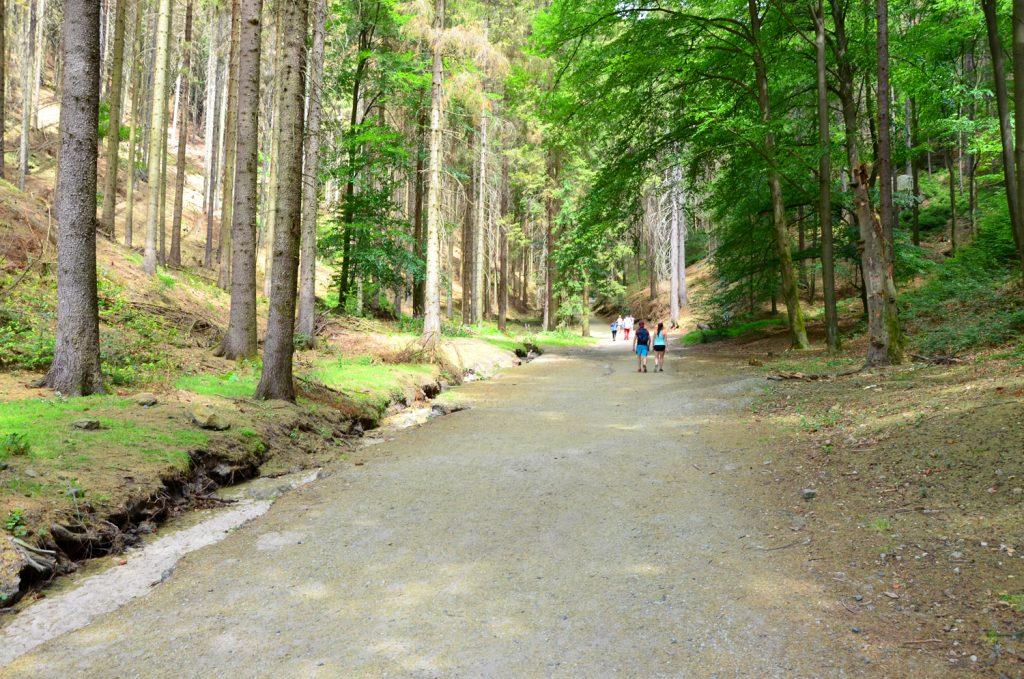 K Pravčickej bráne cez les