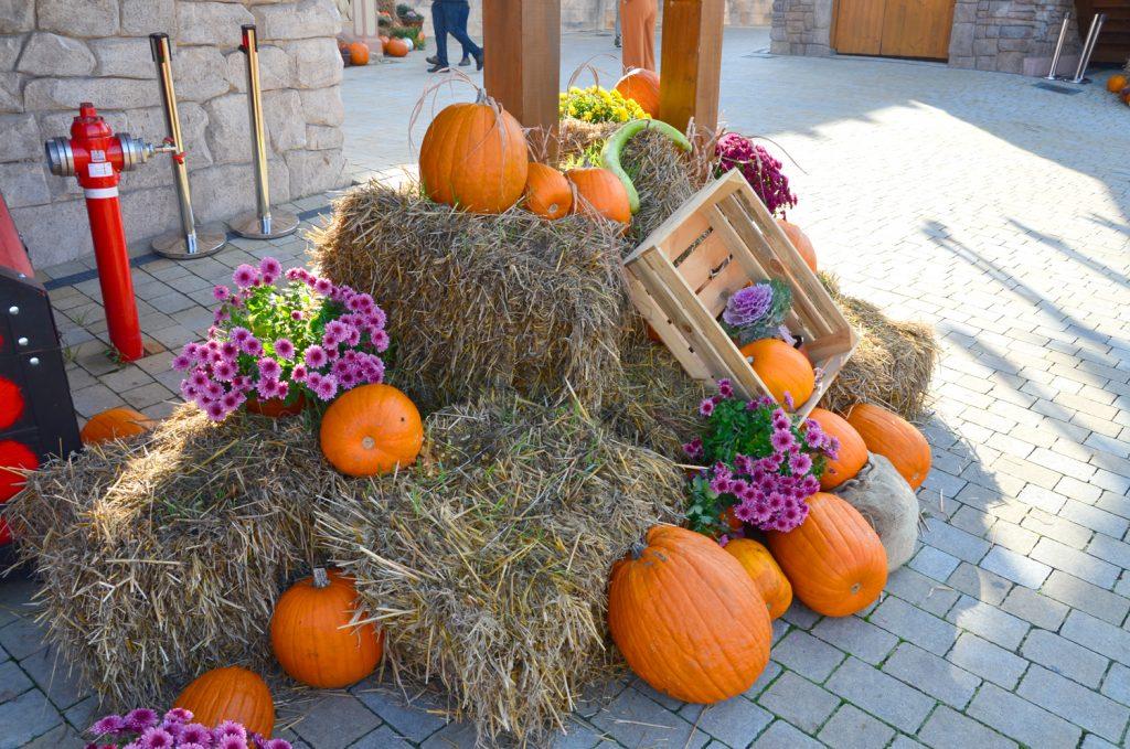 Halloween v parku - A opäť ďalšie tekvice