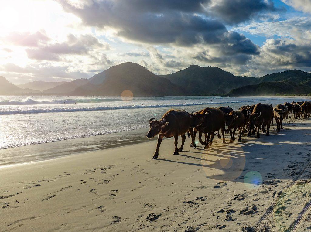 Najkrajšie pláže sveta: Selong Belanak Beach / Lombok / Indonézie