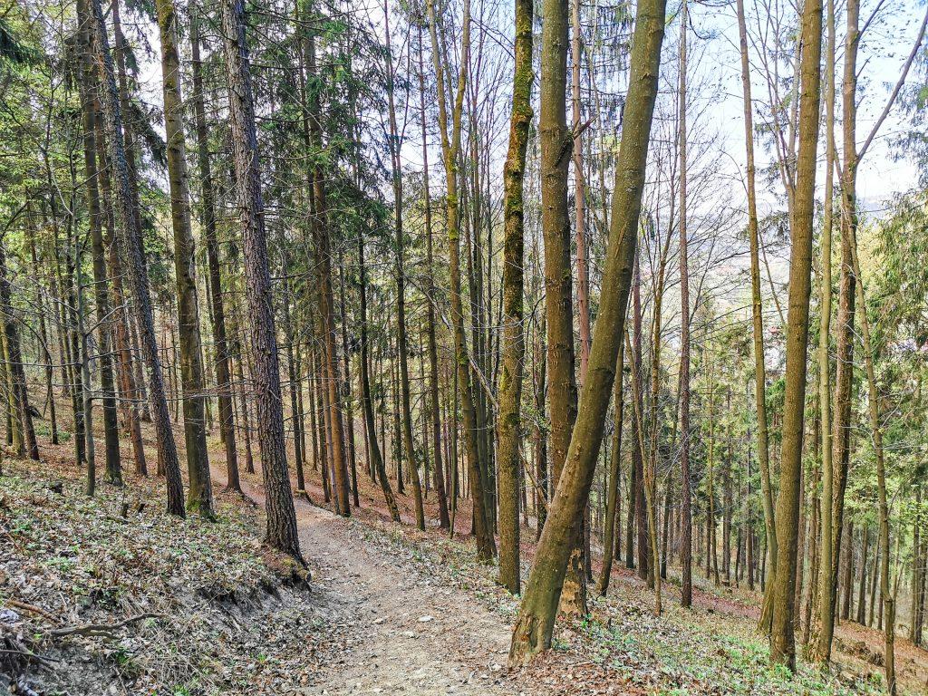 Cestou nadol do Starej Bystrice