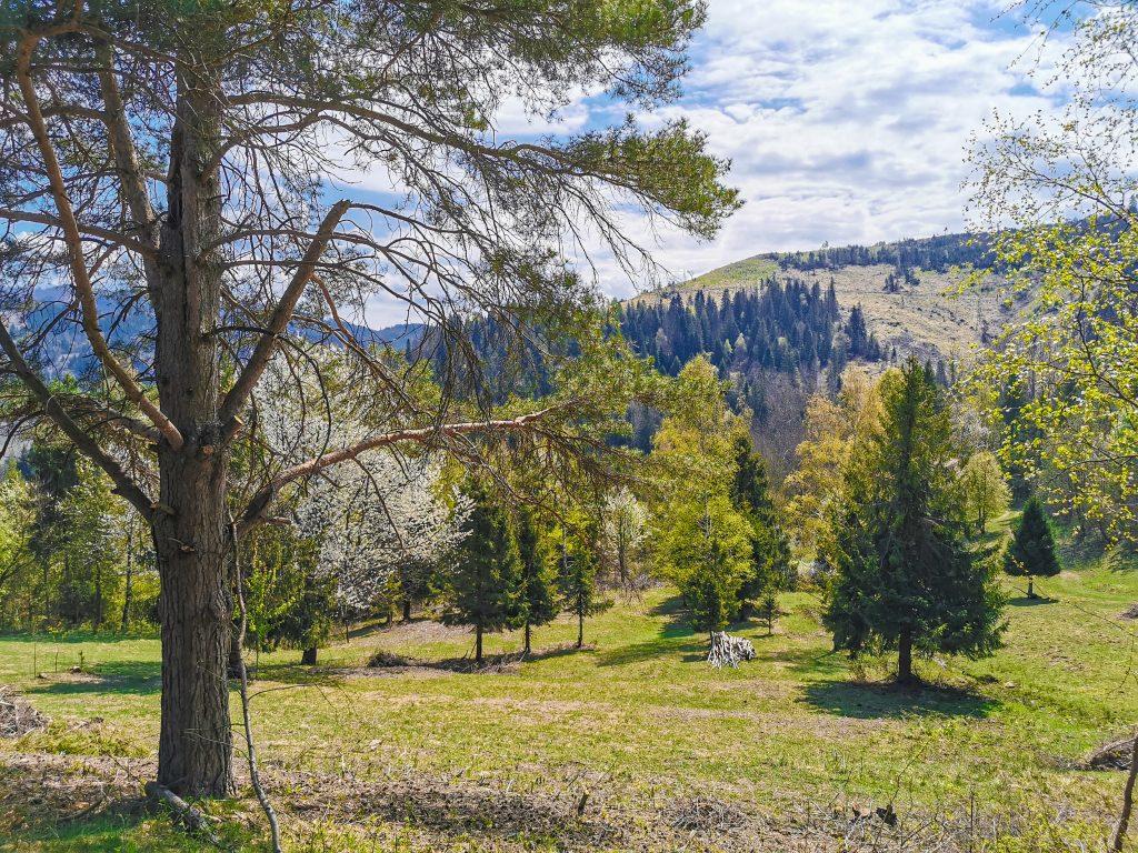 Rozhľadňa na Hladkom vrchu: Kysucká príroda