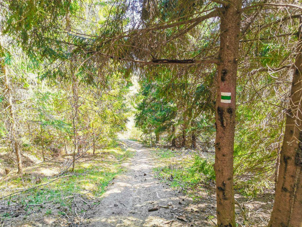 Rozhľadňa na Hladkom vrchu: Približne v polovici cesty opustíte les a pokračujete po hrebeni