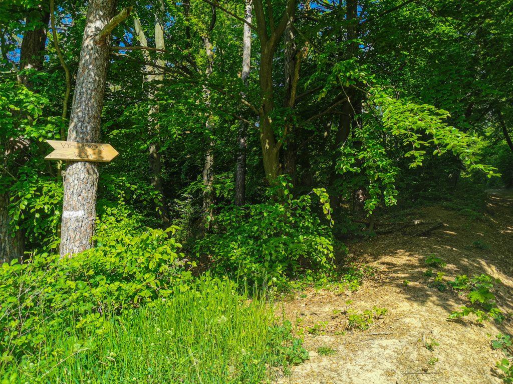 Približne v polovici cesty pokračujete cez les