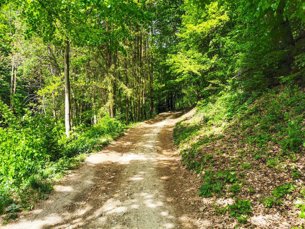 Väčšina cesty vedie cez les