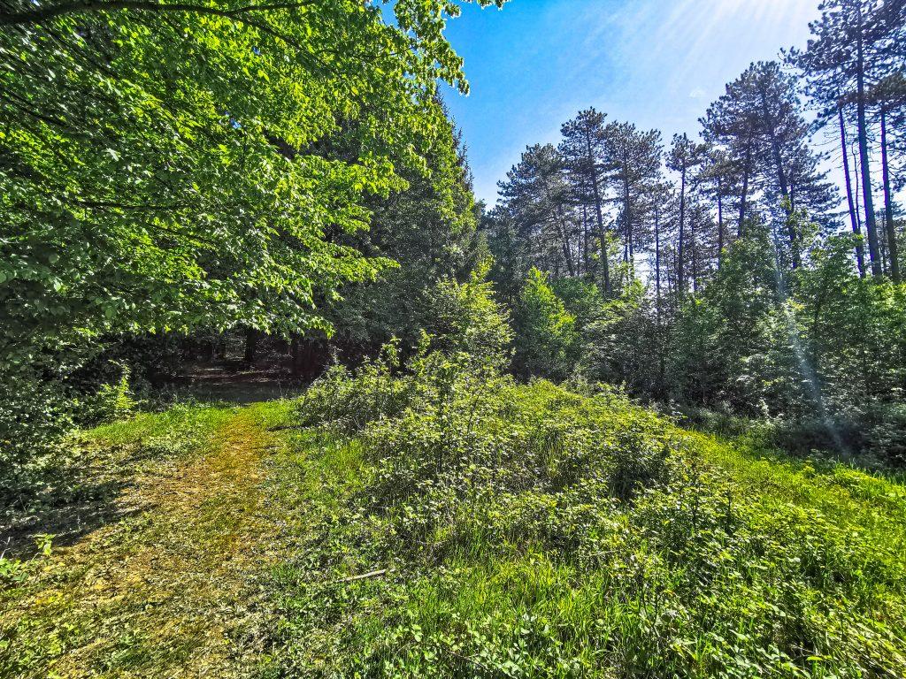Pôjdete cez les