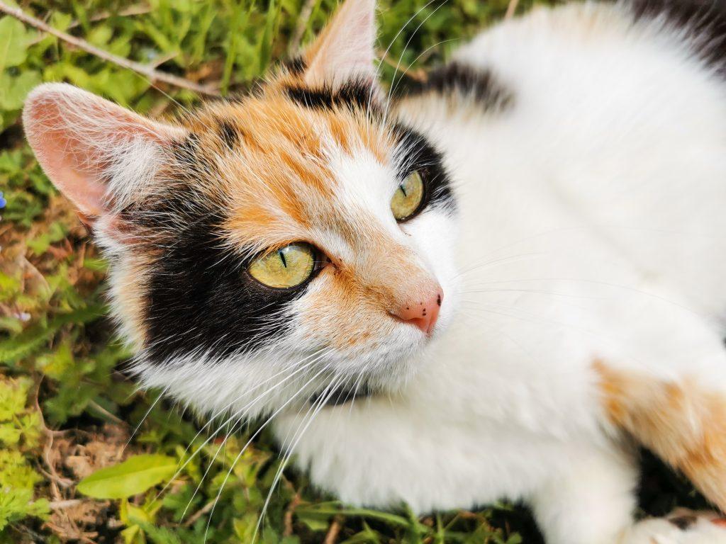 A toto je Prdka - naša VIP mačka