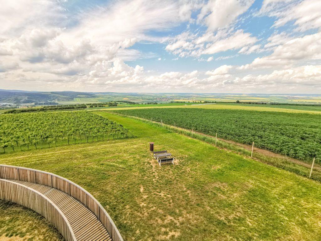 Stezka nad vinohrady - výhľad