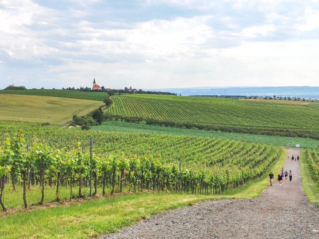 Prechádzka cez vinohrady