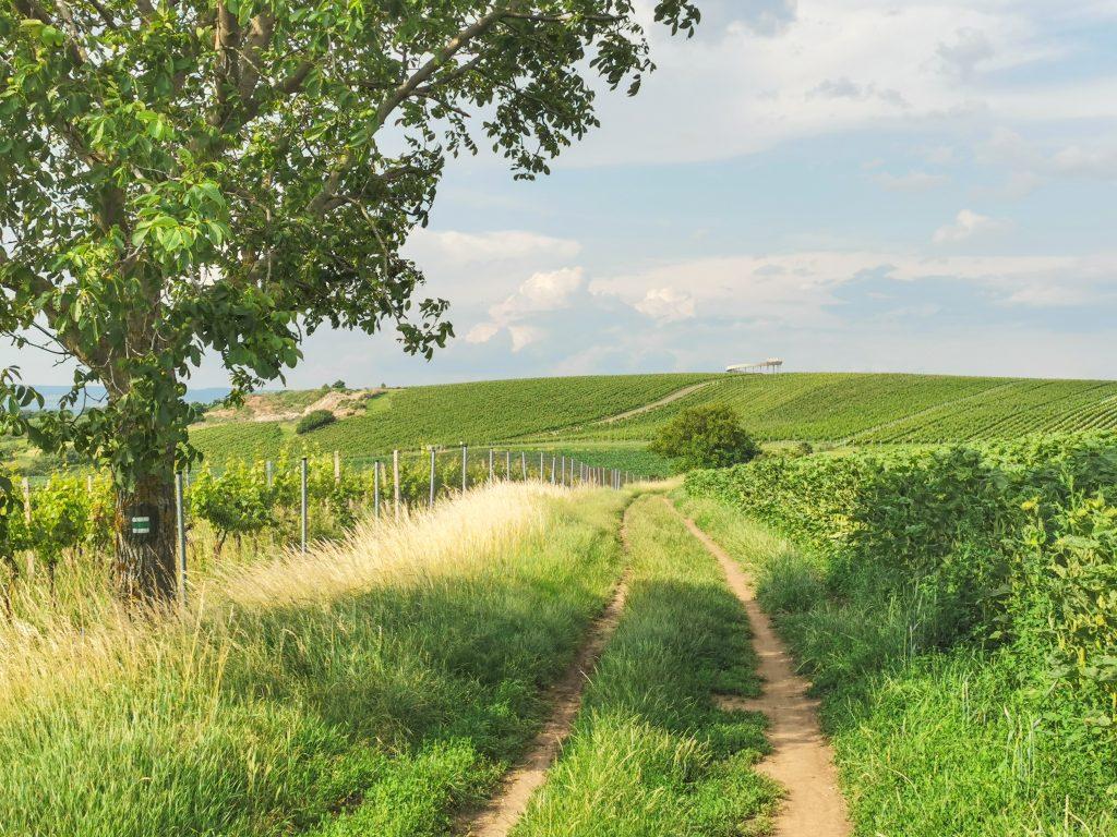 Prechádza cez vinohrady