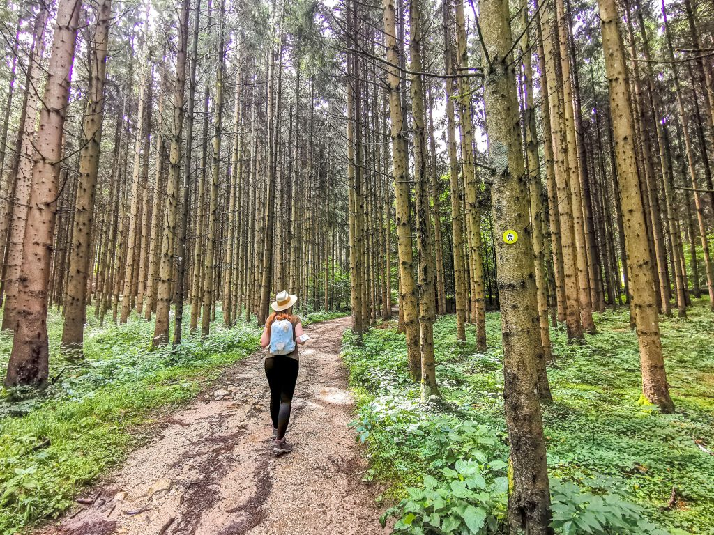 Dlhšia cesta z rokliny Vintgar vedie cez les