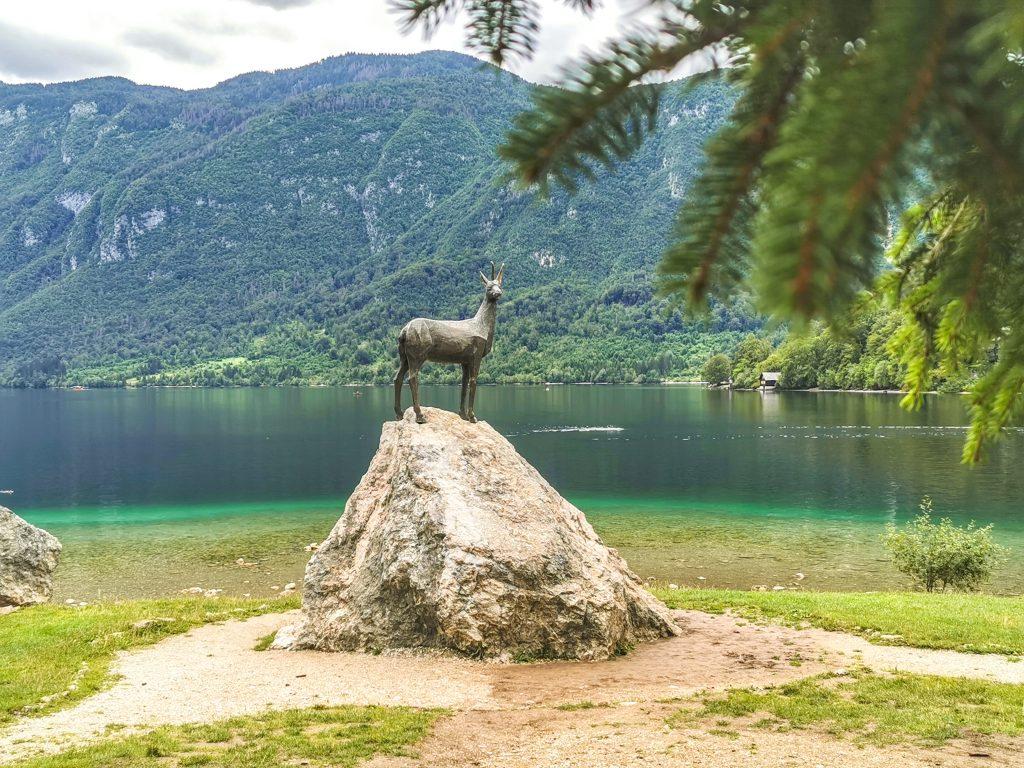 Jazero Bohinj - Zlatorog