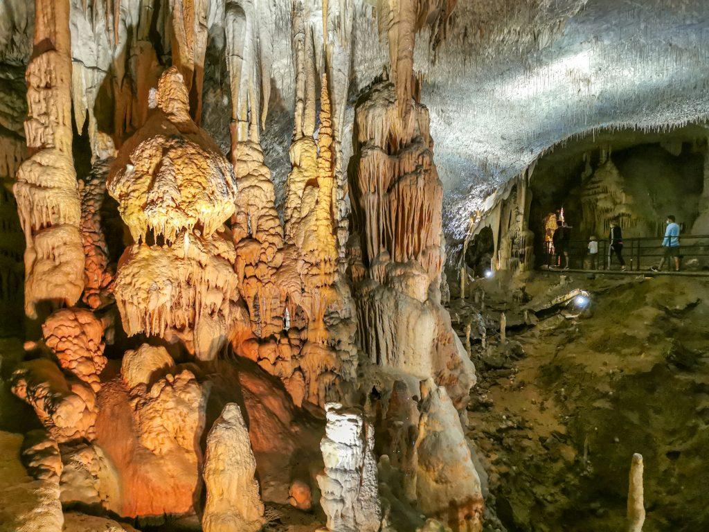 Okrem netopierov alebo aj motýľov tu nájdete zvláštneho mloka nazývaného jaskyniar vodný, ktorý je dokonale prispôsobený životu v tme, pretože takmer nevidí, no jeho sluch a čuch je vyvinutý oveľa lepšie.