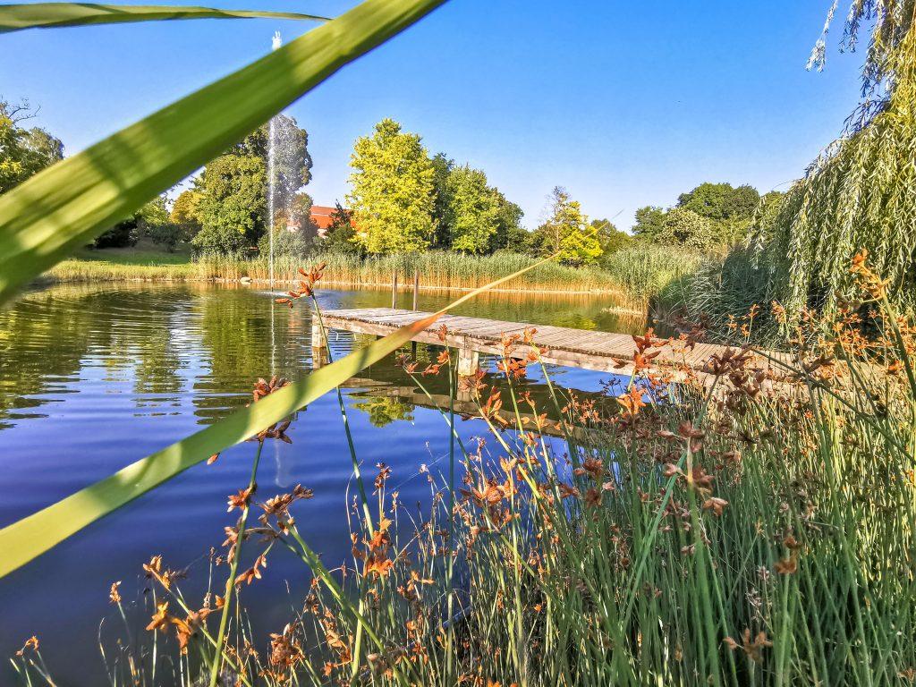 Vo veľkom areáli kaštieľa Château Béla sa nachádza priestranný anglický park s 3 jazierkami