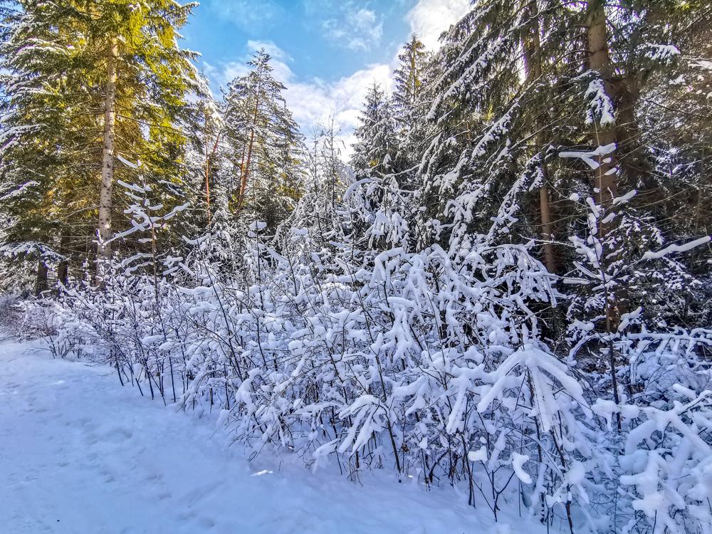 Zimná príroda v Turci