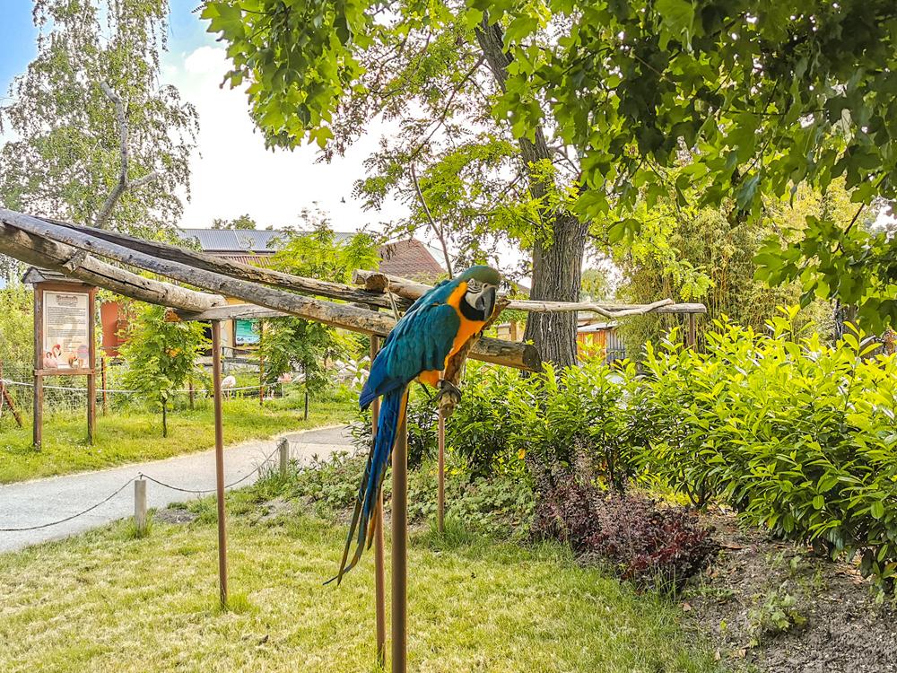Zoologická záhrada Xantus János Győr