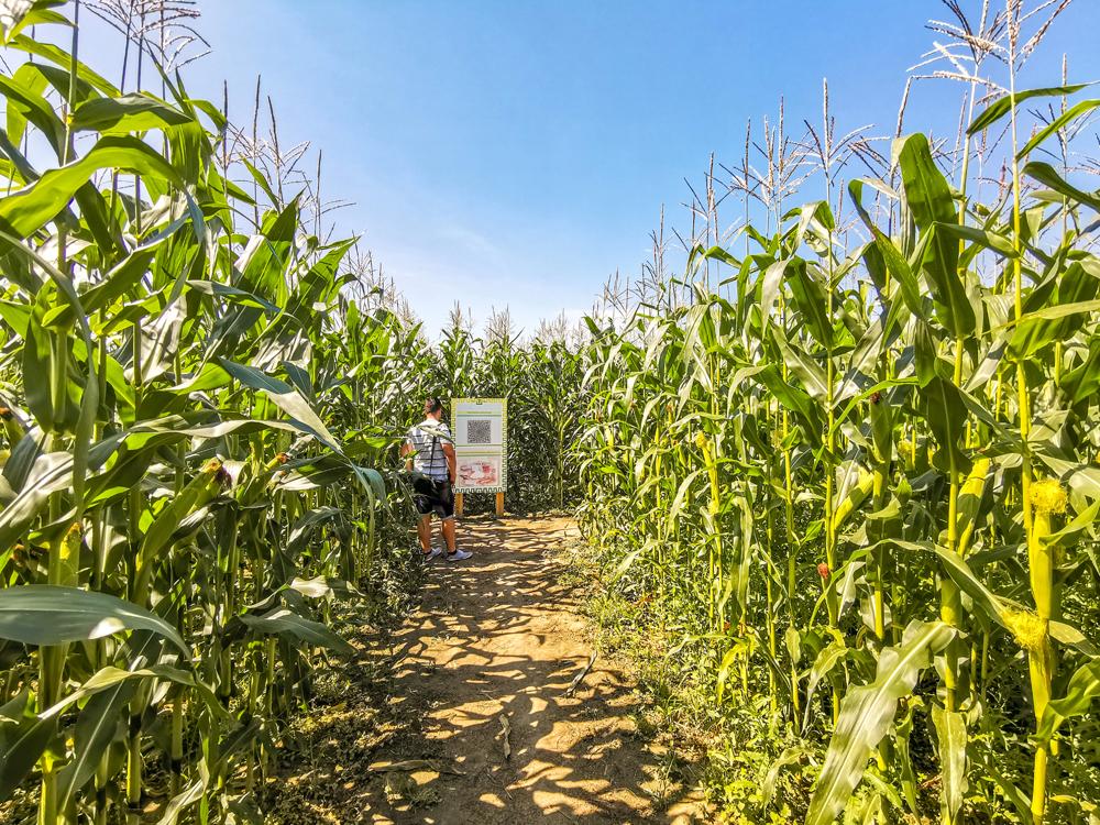 Bludisko v kukurici v obci Maršová - Rašov