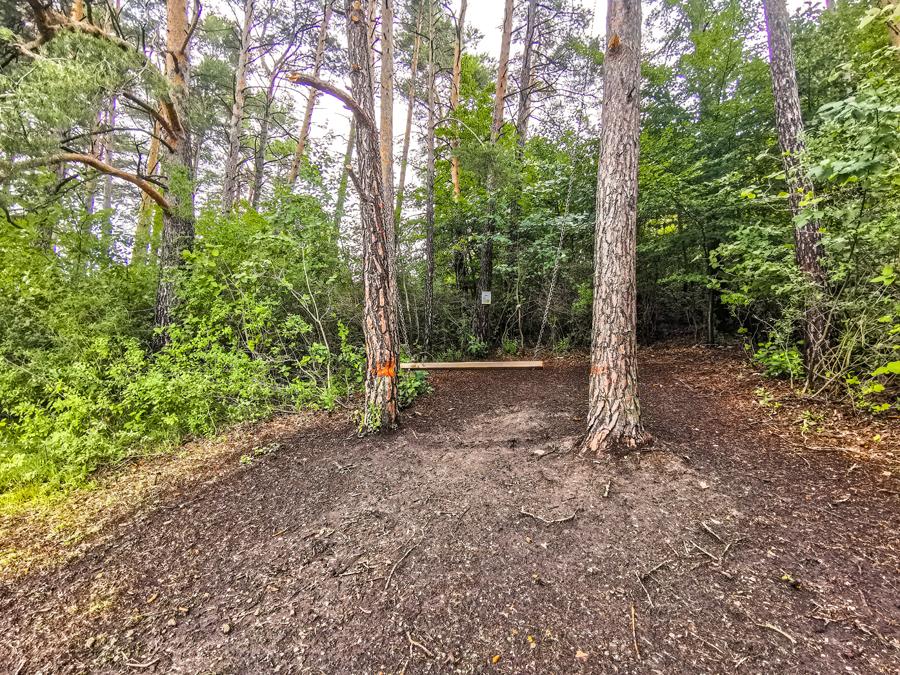 Hôrdačka v lese