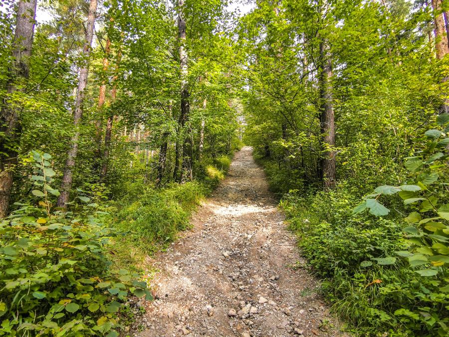 Cesta vedie lesom