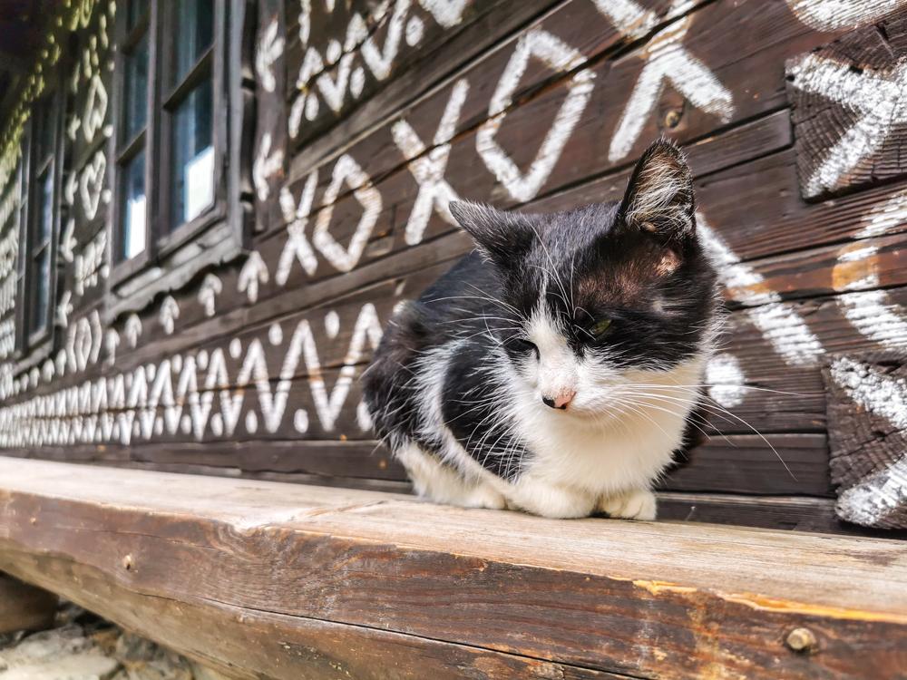 Mačiak Čičmanský